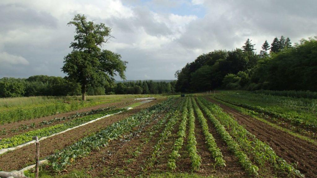 Plein champ de l'espace test agricole